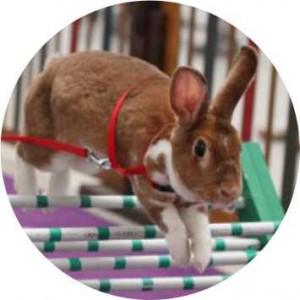Emblém barevný EM132 králičí hop